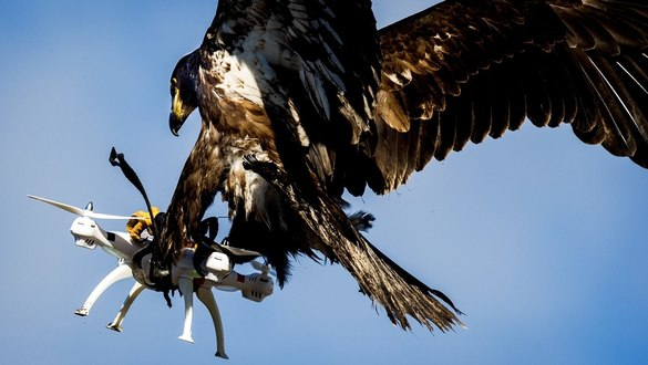 It's a cat and mouse game as militaries fight the big threat of small drones