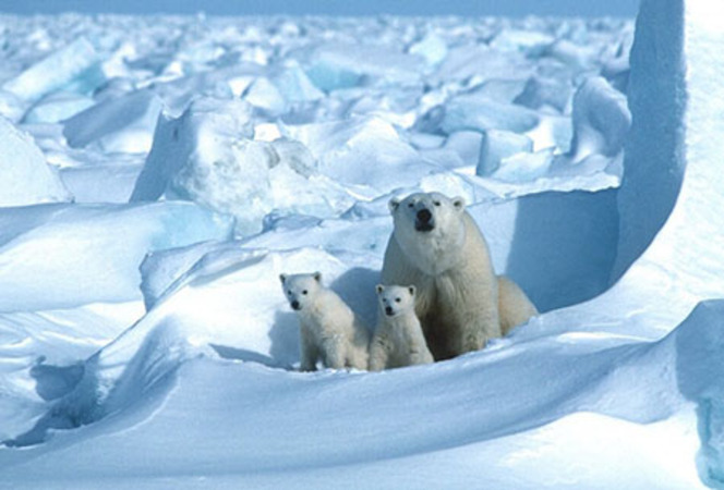 'Big chill' for alarmists: Arctic sea ice is expanding