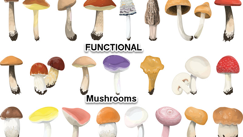 Functional Mushrooms: The Psychedelics Stepping Stone