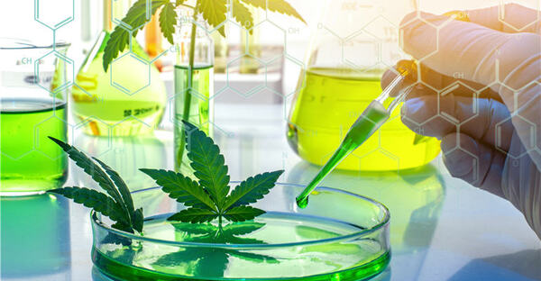 Cannabis 'Bioavailability': A Commercial Game-Changer