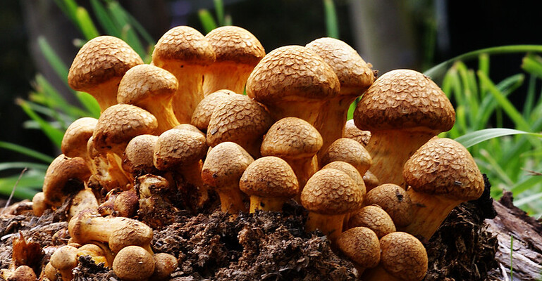 Further Research into Psilocybin Opens New Doors for Treatment