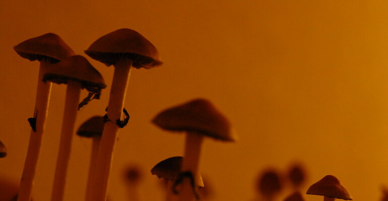 This is Why the Psilocybin Story is Quickly Gaining Momentum