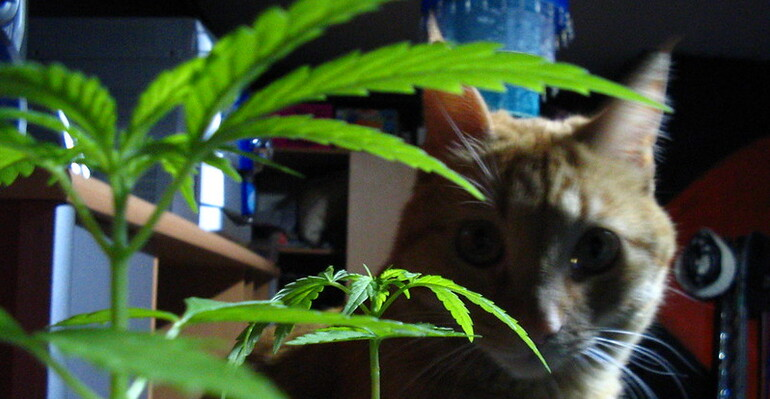 Veterinarians Can Consult On Marijuana And CBD Therapy For Pets Under Michigan Governor-Signed Bill