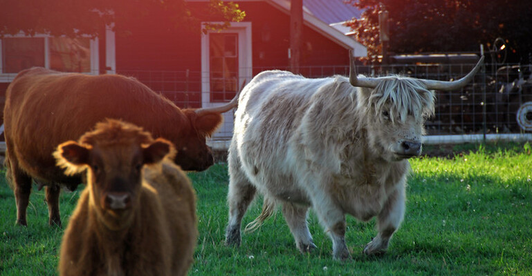 University Gets Federal Grant to Study Processed Hemp as Cattle Feed